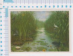 Oude Schoolplaten Van M.A. Koekkoek - Het Naardermeer 1987 - Netherlands