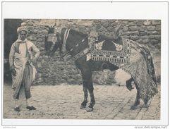TUNISIE CHEVAL ET CAVALIER CPA BON ETAT - Tunesien