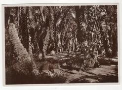 """Somalia Italiana - Carte Neuve. Vera Fotografia. Série L  N°9. """" Oasi Di Datteri """" - Somalie"""