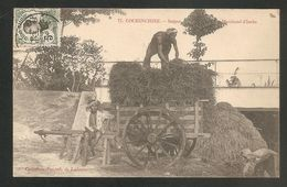 77. COCHINCHINE -- SAIGON - Marchand D' Herbe -- Métier - Viêt-Nam