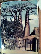 MADAGASCAR  AMORON TSIRAKA ALBERO BOABAB   N1975 GI17593 - Madagascar