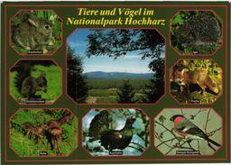 Tiere Und Vögel Im Nationalpark Hochharz Mehrbildkarte - Allemagne