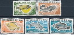 Mali  Vissen - Vissen