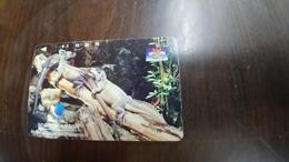 Indonesia-(s319)-animals-ambonese Sail-fin Lizard-(75units)-used - Indonesia