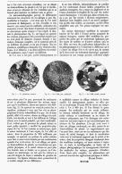 MICROMETALOGRAPHIE De L'OR   1906 - Minerales & Fósiles