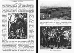 """FORETS De KHROUMIRIE  Liége Et Tanin  """" TUNISIE """"  1906 - Altri"""
