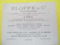 Carte Commerciale/Eloffe & Cie/NATURALISTES/Place Saint André Des Arts/Paris/Médaille D'Or Expo 1878/ FinXIX    CAC107 - Francia