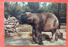 Parc Zoologique De La Palmyre : éléphant - Éléphants
