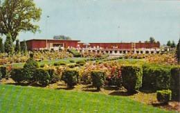 Indiana Gary Beautiful Rose Garden At Gary Country Club - Gary