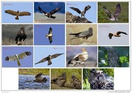 Aves Rapaces De La Peninsula Iberica (birds Of Prey) Postcard Collection (30 Differents)  - Size:15x10 Cm.aprox. - Pájaros