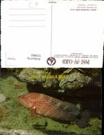 553082,Tiere Australia Great Barrier Reef Fisch Coral Koralen Queensland - Ansichtskarten