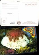 553083,Tiere Australia Great Barrier Reef Fisch Coral Koralen Queensland - Ansichtskarten