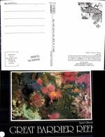 553099,Tiere Great Barrier Reef Australia Koralen Fisch Fish - Ansichtskarten