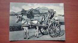 Carro Siciliano - Palermo