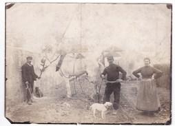 Ancienne Photo Agriculture Paysans Et Leurs Chiens Charrue (région à Identifier) 13 X 18 Cm - Personnes Anonymes