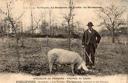 PERIGORD  RECHERCHE DES TRUFFES LA RECOMPENSE PUBLICITE TRUFFES AU CACAO PHILIPPON CHOCOLATIER RUE TAILLEFER A PERIGUEUX - Périgueux