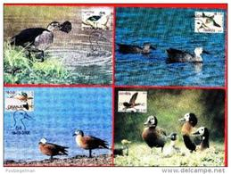 NAMIBIA,  2000, Mint Maxi Cards,  Sa 318-321,  Ducks Of Namibia, F3840 - Namibië (1990- ...)