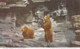 Missouri St Louis Kodiak Bears St Louis Zoo