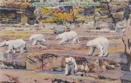 Missouri St Louis Polar Bears St Louis Zoo