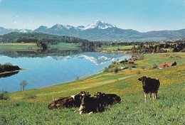 Gumefens, Vaches - FR Fribourg
