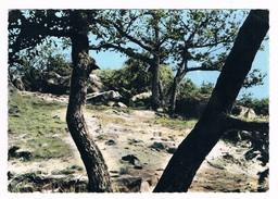 LARDY  91  Une Vue De Sous Bois A Reconnaitre En 1971 - Lardy