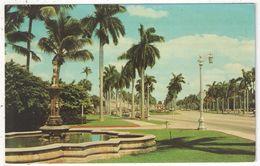 PALM BEACH - Looking East On Beautiful Royal Poinciana Way - Palm Beach