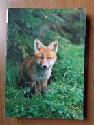 Vos, Fox, Renard, Fuchs  --> Written - Animaux & Faune