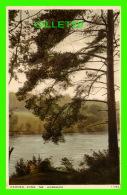 HORSHAM, SUSSEX, UK -  HAMMER POND, NR.  - J. SALMON LTD - - Angleterre