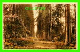 HOLBUSH, SUSSEX, UK - ST LEONARD'S FOREST -  F. FRITH & CO LTD - - Angleterre