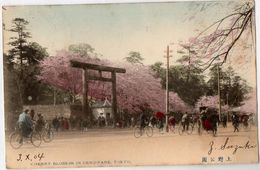 CHERRY BLOSSOM IN UENO-PARK, TOKYO. - Tokio