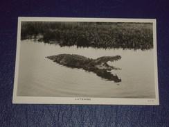 Afrique Cpa Carte Photo Ouganda - Uganda Africa. Lutembe - Alligator Crocodile - A.T.S. - Oeganda
