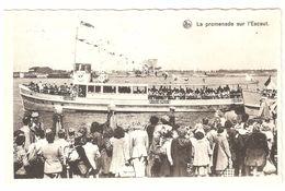 Antwerpen / Anvers - La Promenade Sur L'Escaut - Boot Flandria - Bateau D'excursion / Schiff / Boat - Geanimeerd - Antwerpen