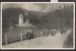 Celerina ( Chiesa ) : Vacci ; Kuhherde Auf Der Alm ; Ca 1921 (14'848) - GR Grisons