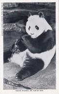 Missouri St Louis Giant Panda Bear St Louis Zoo