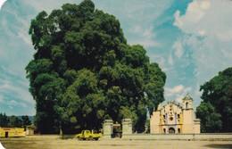 ARBOL TULE/TULE TREE. OAXACA, MEXICO - CIRCA 1960S. - BLEUP - Mexico
