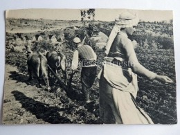 ALBANIA SKUTARI Shkodra Drishti Semina Grano AK Old Postcard - Albania