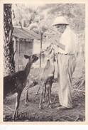 LANBORENE, GABON, AFRICA. 1956. CIERVO/CERF/DEER - BLEUP - Gabon
