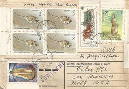 Ukraine USSR 1985 Kiev Pamir Shrew Sorex Buchariensis Five-toed Pygmy Jerboa Cardiocranius Paradoxus Rodent Cover - Rodents