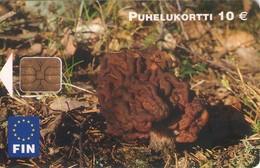FINLANDIA. SETAS - MUSHROOMS - CHAMPIGNONS - FUNGHI. Korvasieni - Gyromitra Esculenta. FIN-D37. (504). - Fleurs