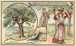 CHROMO CHOCOLAT  GUERIN BOUTRON -   MURIER   -  PARIS - Guerin Boutron