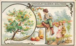 CHROMO CHOCOLAT  GUERIN BOUTRON -   ABRICOTIER   -  PARIS - Guerin Boutron