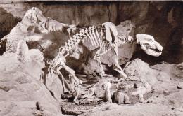 Bärenhöhle - Karlshöle - Bears
