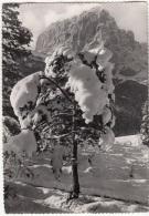 """Paesaggio Alpino Invernale Con Neve Monti. Serie """"Bianca Fata"""" - Cartoline"""