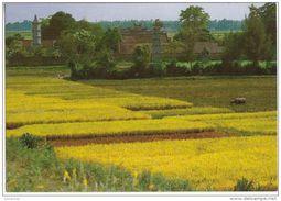Vietnam - Panorama Landscapes -Vista Della Pagoda But Thap  - Ha Bac - Vietnam