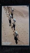 CPM CHEVAL PRATIQUE MENSUEL HORSEWARE IRELAND PHOTO LAHURE GALOP SUR LE SABLE - Chevaux