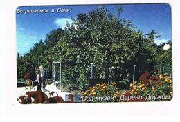 RUSSIA - SOCHIELEKTROSVIAZ , SOCHI  (CHIP) - FRIENDSHIP TREE -  USED - RIF. 9149 - Russie