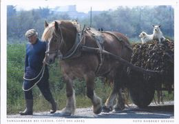 Künstler Fotokarte  -  Tangsammler Bei Cleder -Cote Des Abers  - Foto Norbert Kustos    **19950-052** - Cléder