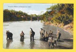 POSTCARD 1910years SRI LANKA CEYLON ELEPHANTS & NATIVE KATUGASTOTA ASIA ETHNIC - Postcards