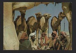 BAHRAIN 1970 Years Postcard Natives & Desert & Camel Camels  Z1 - Postcards
