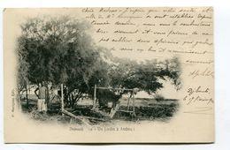 CPA  Djibouti  :  Jardin à Ambouli 1904    A   VOIR  !!! - Zonder Classificatie
